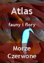 Nurkowanie - Atlas fauny i flory Morze Czarwone