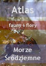 Nurkowanie - Atlas fauny i flory Morze �r�dziemne