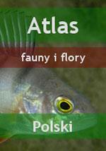 Nurkowanie - Atlas fauny i flory Polski