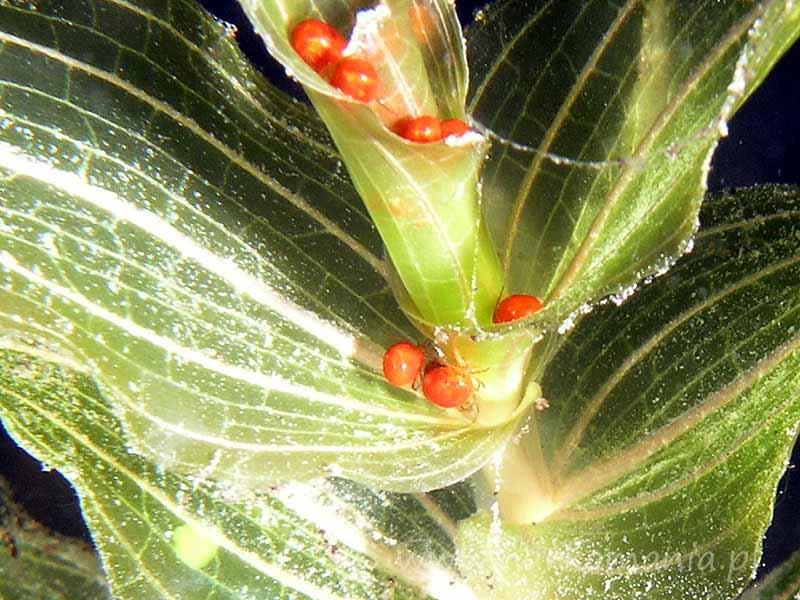 Pajęczaki (Arachnida)