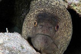 ryby murenowate