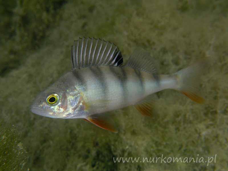 Fauna i flora polskich jezior