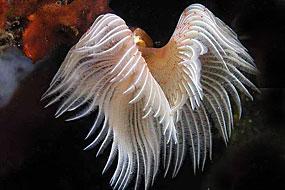 Wieloszczety (Polychaeta)