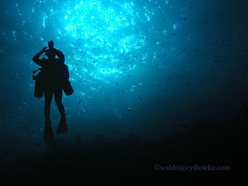 Morze Czerwone - zdjęcia podwodne