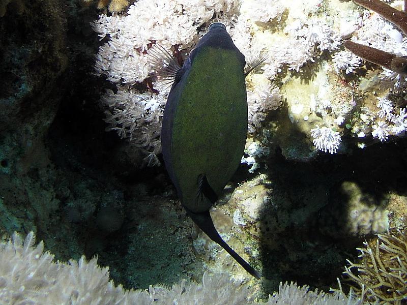 Kosterowate (Ostraciidae)