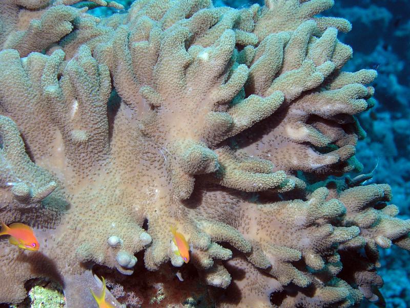 fotografia podwodna Egipt hobby