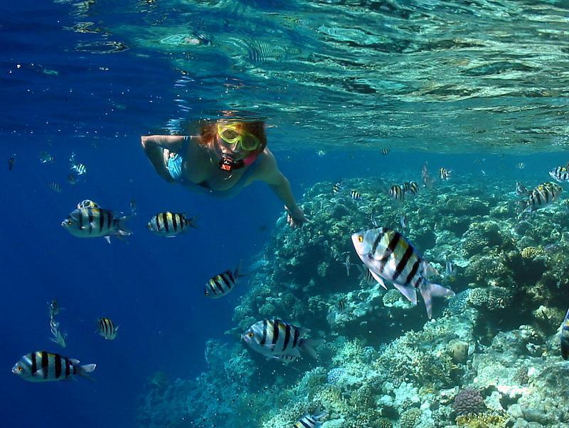 nurkowanie Egipt, fauna flora, rafa diving