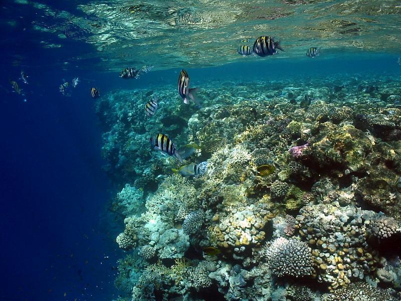 kolor wody morskiej
