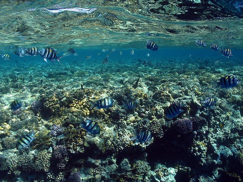 Morze Czerwone - rafa koralowa