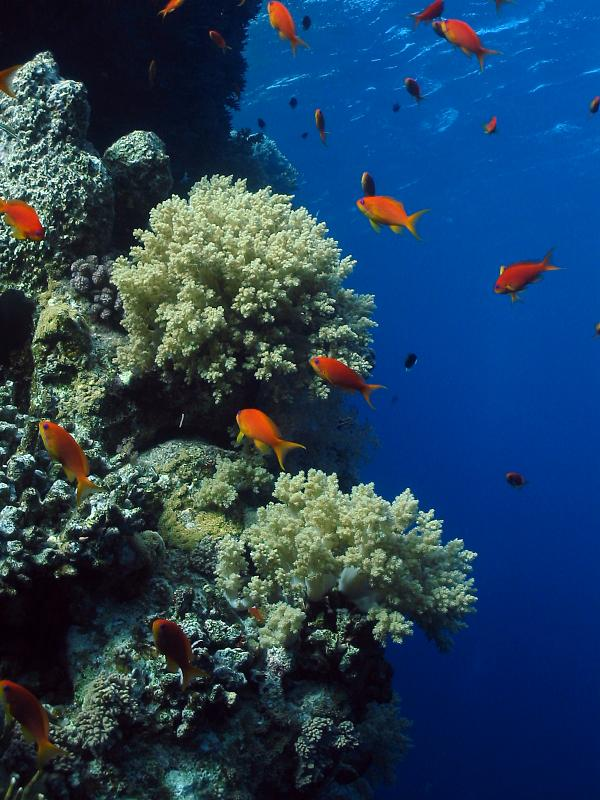 nurkowanie Egipt, fauna flora, rafa, morze