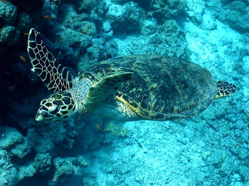 Żółwie (Testudines, Chelonia)
