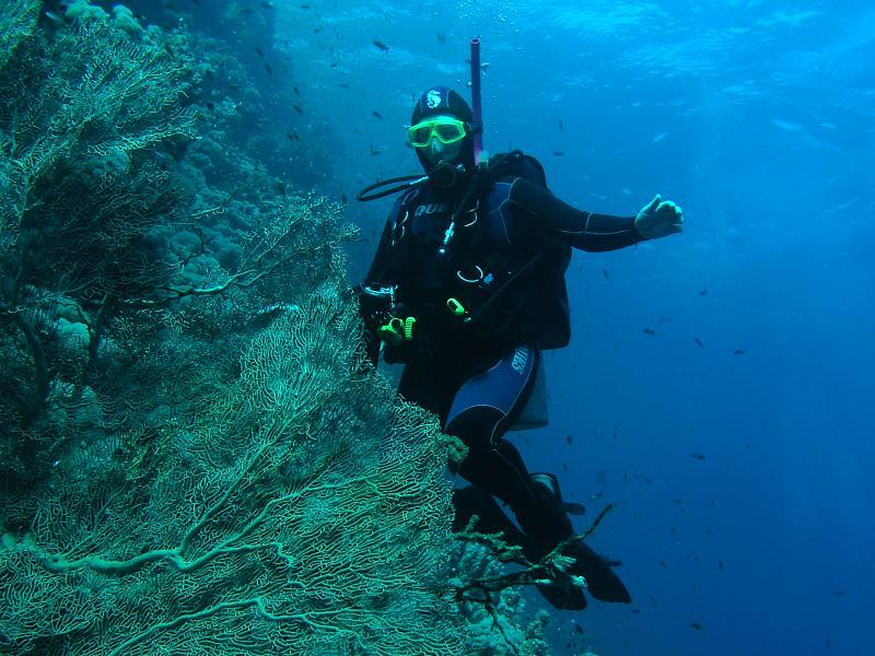 nurkowanie Morze Czerwone