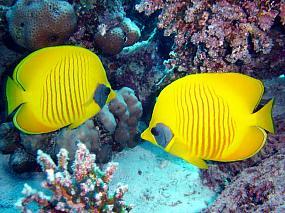Ryby ustnikowate