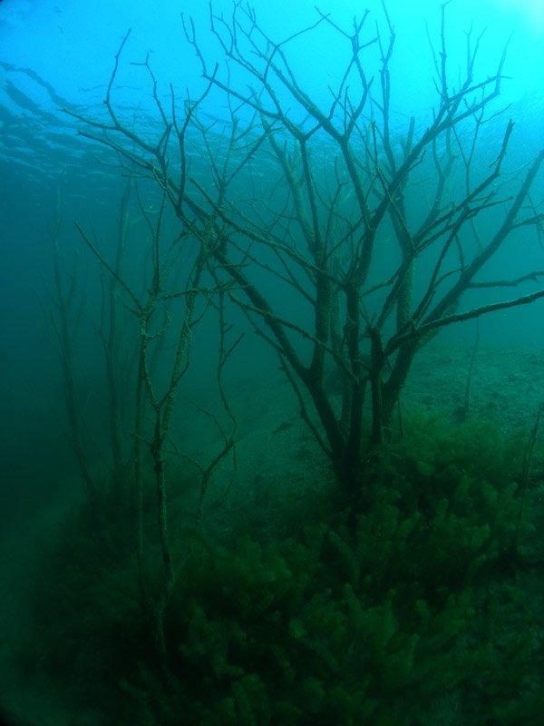 nurkowanie Zakrzówek widok zatopione drzewa całe