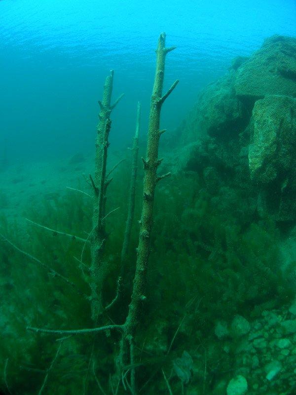 nurkowanie Zakrzówek widok zatopione drzewa
