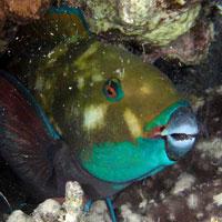 Fauna i flora Morza Czerwonego