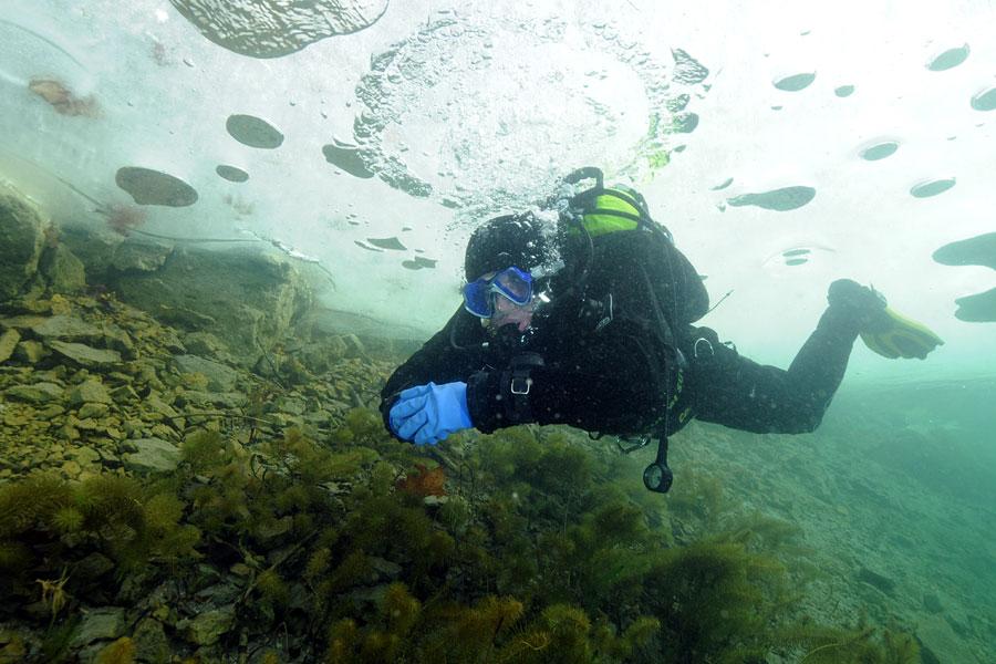 nurkowanie pod lodem