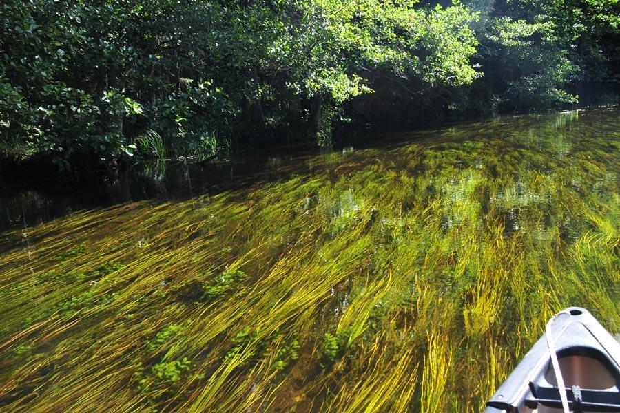 spływ kajakowy Czarna Hańcza