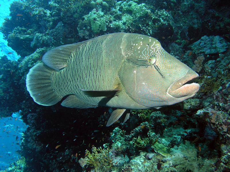kompozycja - fotografia podwodna